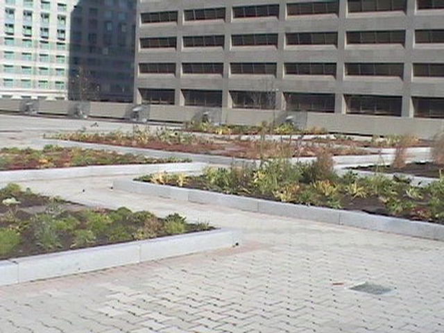 Green roof plots at Toronto City Hall