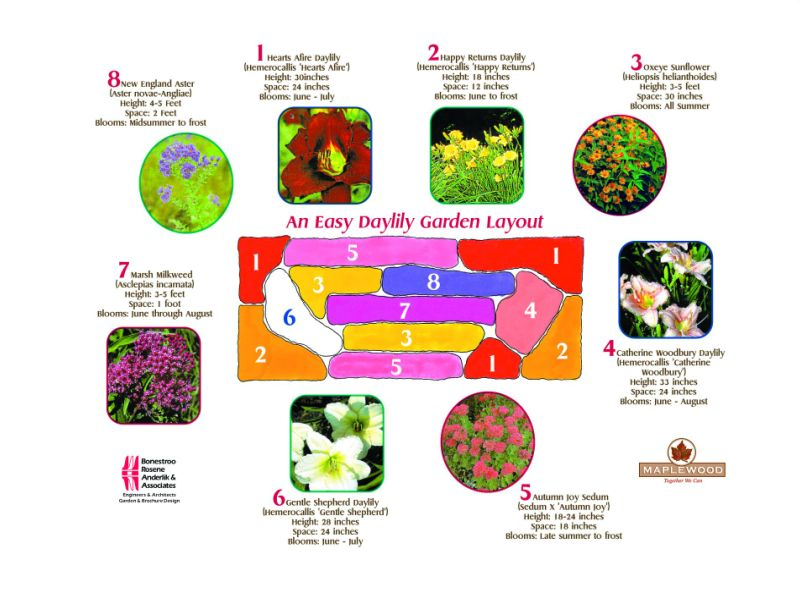 Large Printable Version of a Daylilly Garden Layout